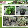 Cacti Plants Before
